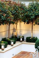MODERN ROOF GARDEN WITH WHITE RAISED BED, GLASS CANDLE HOLDERS, CLIPPED BOX, WHITE GRAVEL AND STANDARD PHOTINIAS. DEVELOPMENT BY CANDY BROTHERS: LIGHTING: LIGHTING DESIGN INT.